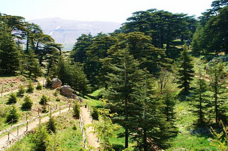 Долина Кедров