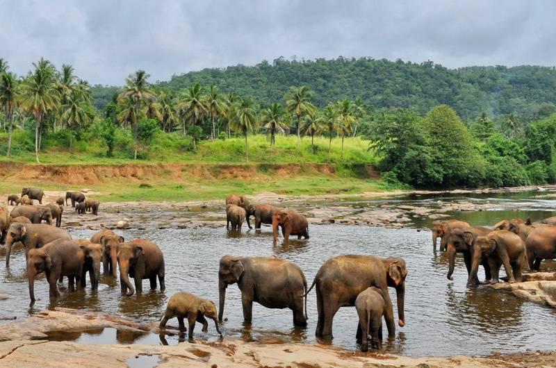 Питомник для слонов