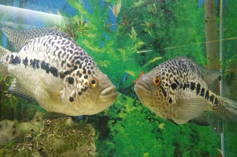 Мацестинский аквариум