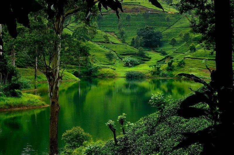 Чайные плантации Нувара Элия, Шри Ланка