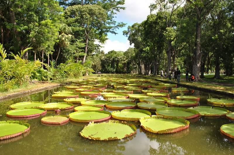 Ботанический сад Pamplemousses (Памплемус)