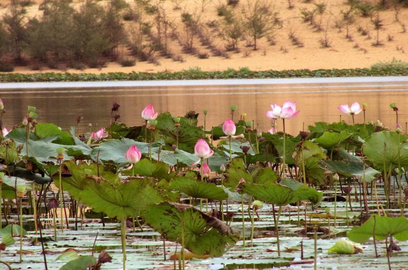 Озеро лотосов. Фантьет