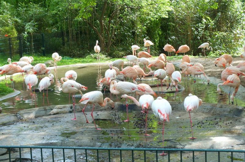Зоопарк Берлина
